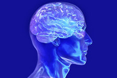 The Humain Brain with the physical body.