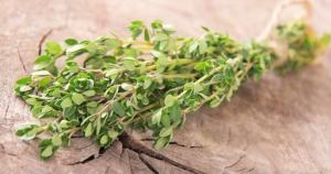 Thymus Vulgaris Health Benefits of Thyme
