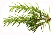 Health Benefits of the Culinary Herb Rosemary