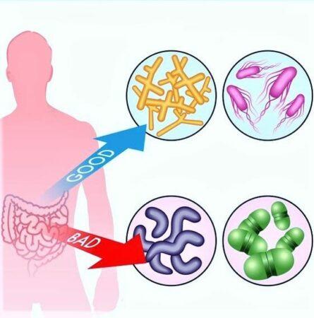 Good and Bad Bacteria image