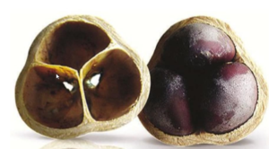 Nuts from Cacay Fruit